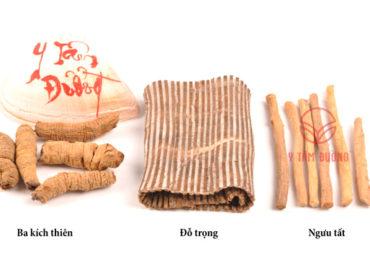 Bài Thuốc Đông Y Chữa Bệnh Viêm Khớp, Thoái Hóa, Gai Đôi